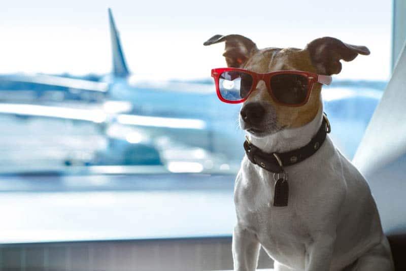 soigneur-animalier-voyager-avec-un-animal-obligations-legales