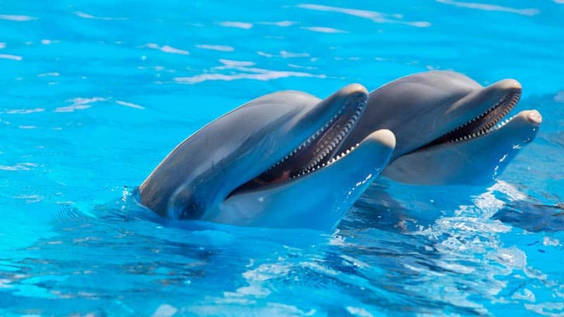 soigneur-animalier-parc-marin