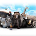 soigneur-animalier-top-10-des-avantages