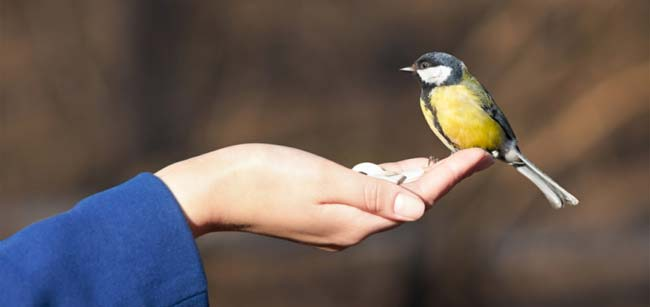 Soigneur-animalier-ornithologie