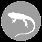 formation-soigneur-animalier-NAC