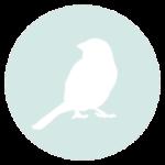 formation-soigneur-animalier-ornithologie