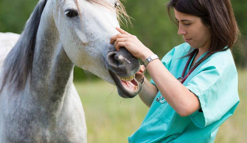 soigneur-animalier-centre-equestre