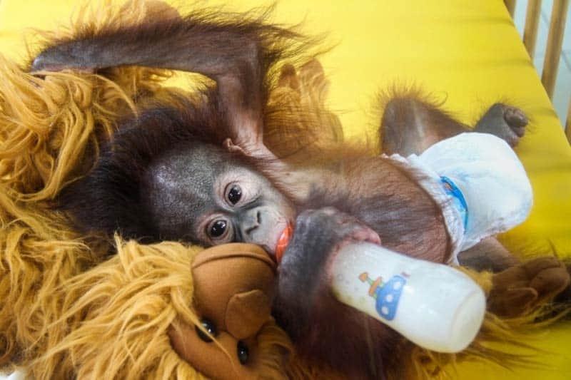 soigneur-animalier-eco-volontariat