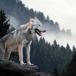 faune sauvage soigneur animalier